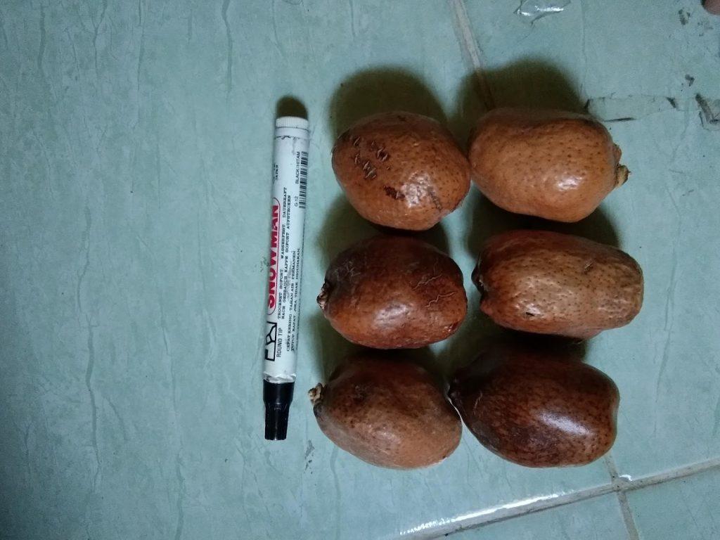 jual buah zuriat